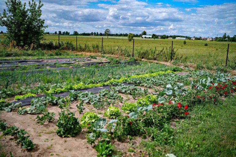 Domowy ogród w agroturystyce na Podlasiu