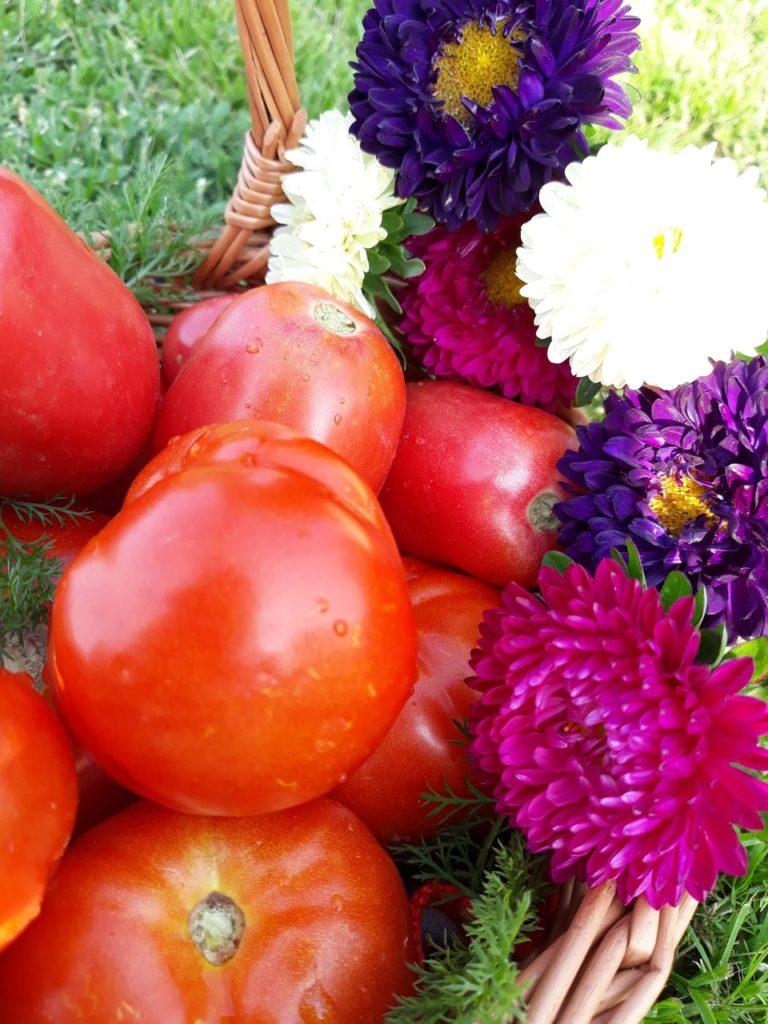 Ekologiczne pomidory agroturystyka Podlasie