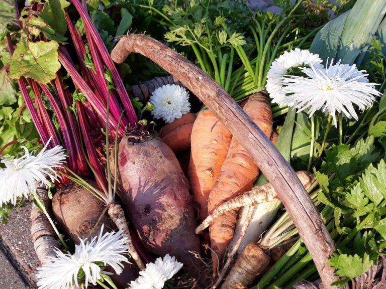 Podlaski kosz warzyw z agroturystyki