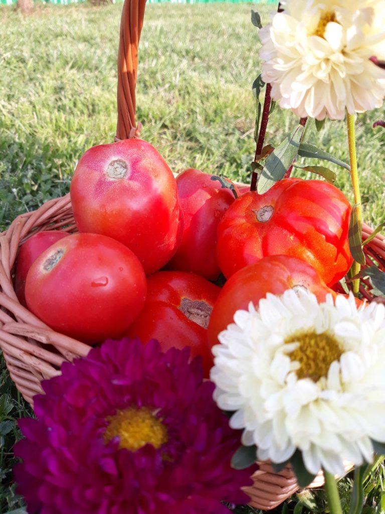 Pomidory - agroturystyka Podlasie noclegi z wyżywieniem