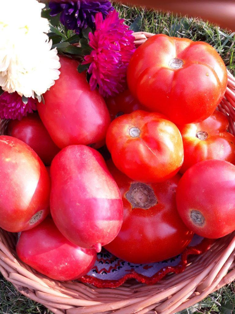 Swojskie pomidory z Podlaskiego ogródka