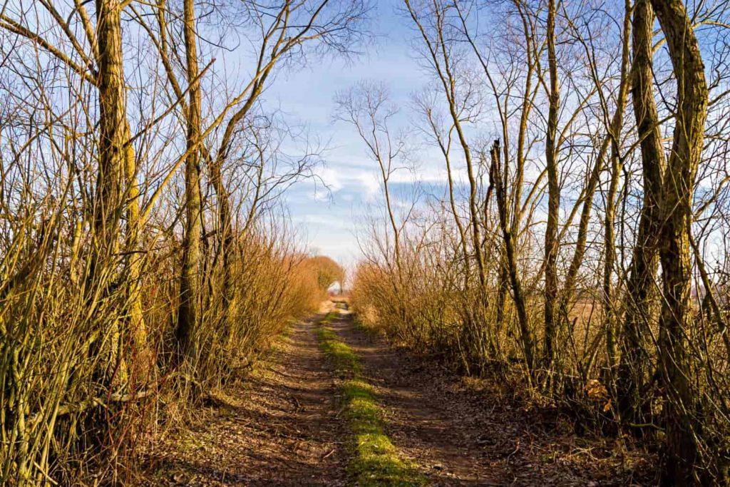 Grobla Honczarowska szlak