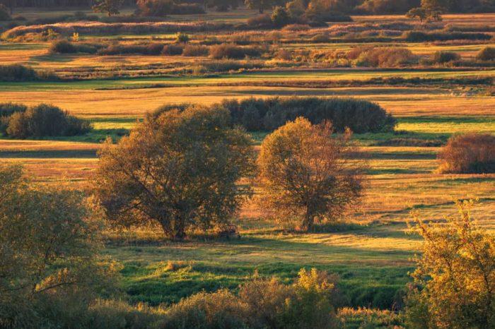 Strękowa Góra łąki