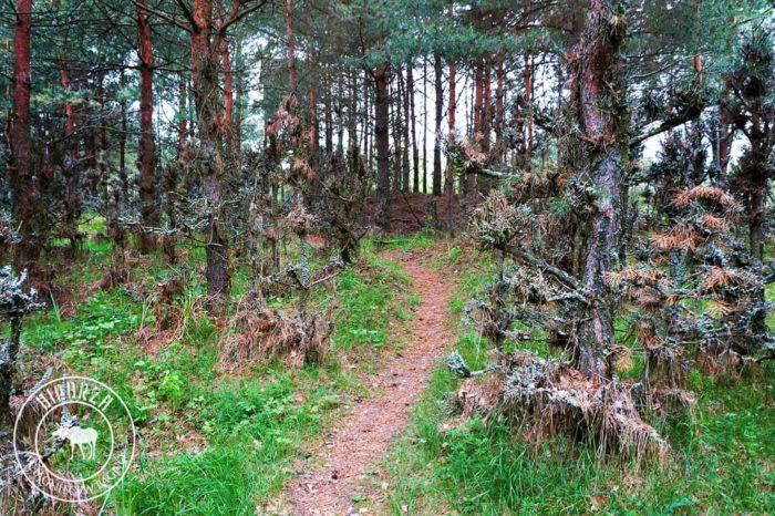 Szlak Barwik Biebrzański Park Narodowy